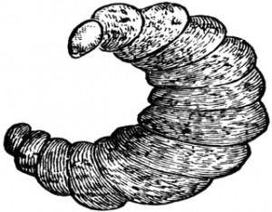 Apa yang dimaksud organisme parasit dan ciri-cirinya