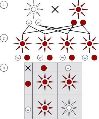Pengertian dan contoh Dominasi lengkap dalam genetika
