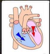Apa yang dimaksud Diastole pada jantung