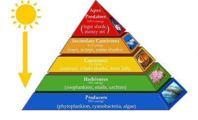 3 Jenis Piramida Energi (jumlah, biomassa dan energi)