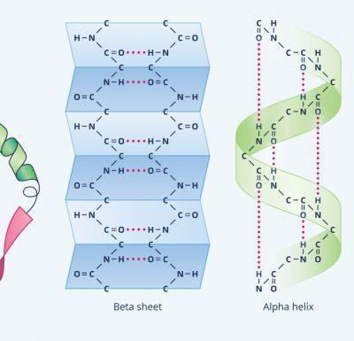 Struktur Protein Sekunder