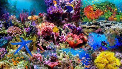 Bintang laut: Ciri-ciri, reproduksi, habitat, jenis dan banyak lagi