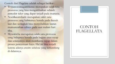 contoh flagellata