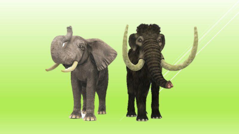 Contoh Evolusi divergen