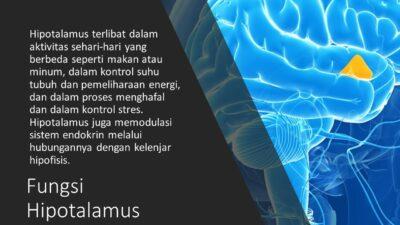 Fungsi Hipotalamus