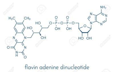 Rumus kimia Flavin adenin dinukleotida