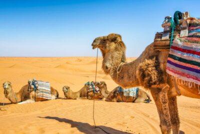 Contoh wilayah formal gurun sahara