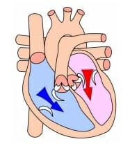 fase diastole