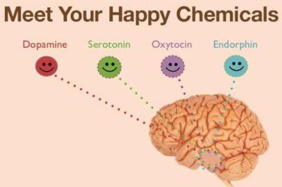 fungsi hormon oksitosin pada manusia