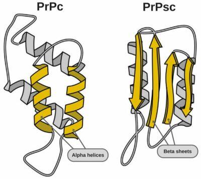 struktur prion