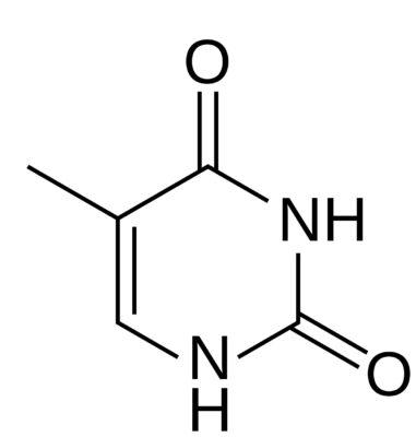struktur timin