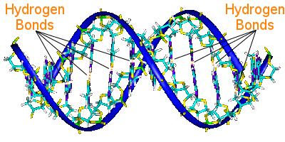 Ikatan Hidrogen dalam DNA