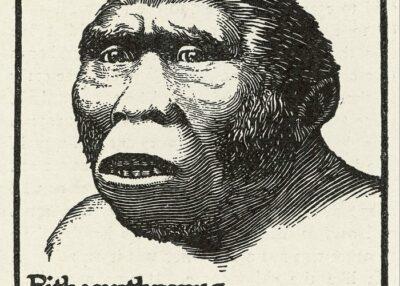 Pengertian Pithecanthropus
