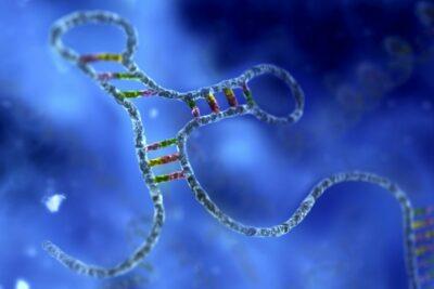 Pengertian RNA: (Ribonucleic acid)