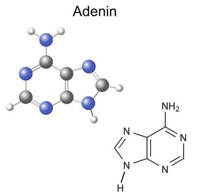 Struktur Adenin