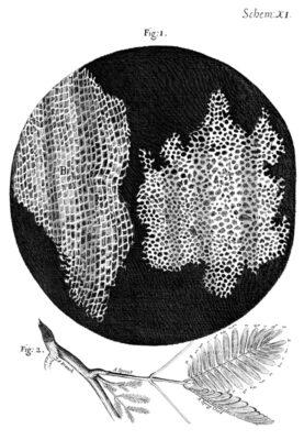 Teori Sel Pada tumbuhan
