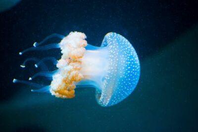 invertebrata bioma laut