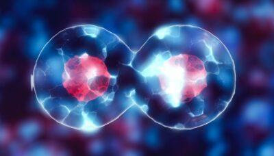 mitosis dan meiosis