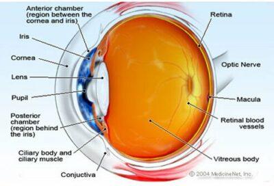 Bagian Mata dan fungsinya
