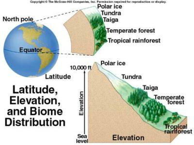 Bagaimana ketinggian dapat mempengaruhi bioma?